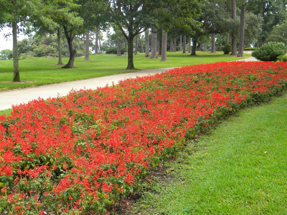 Flower Bed in Bluff Park